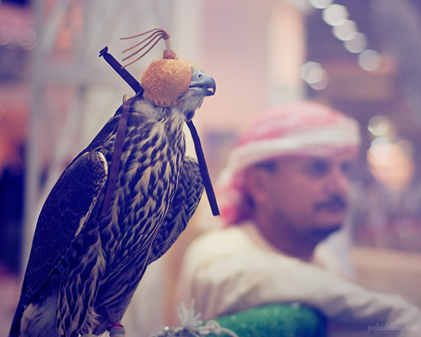 Falconry from Abu Dhabi International Hunting and Equestrain Exhibition, Abu Dhabi, United Arab Emirates