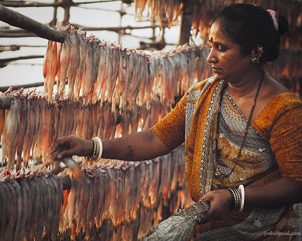 A fisherwoman drying bombil fish or Bombay Duck in Versova, Mumbai