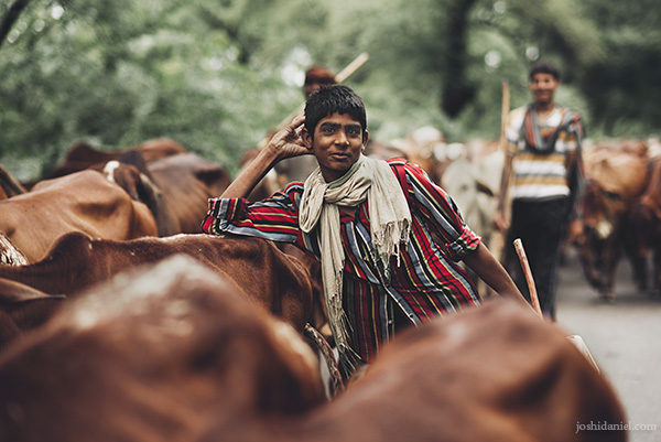 A smiling boy with cattle herd in Punjab, India